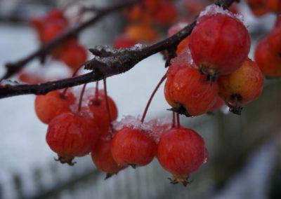 FROMMER gartenreich - winterlicher Strauch