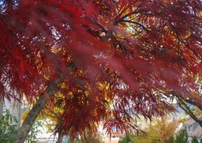 FROMMER gartenreich - Baum
